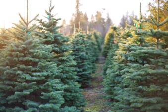 11091403_web1_Christmas-Tree