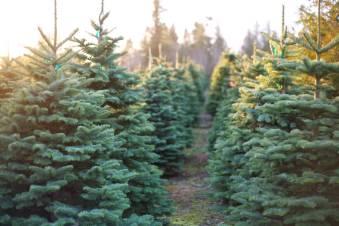 11091403_web1_Christmas-Tree