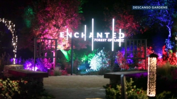 2707530_112817-enchanted-clean